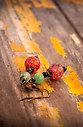 Обеци Sweet Cherry